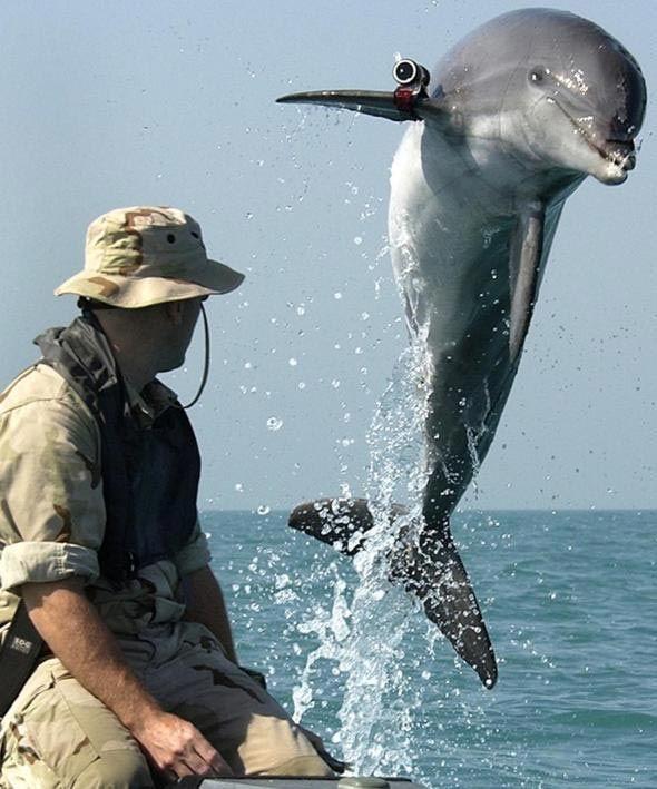 الدلافين المكافحة للإرهاب