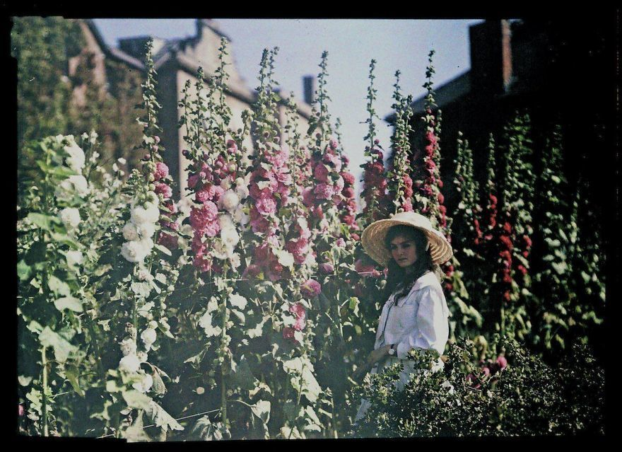 فتاة في بستان مع نباتات الخطمي، سنة 1908