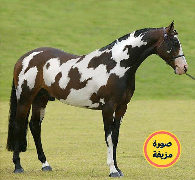 الحصان المكتوب عليه كلمة حصان