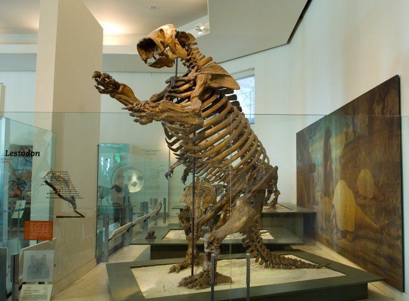 حيوان كسلان عملاق منقرض