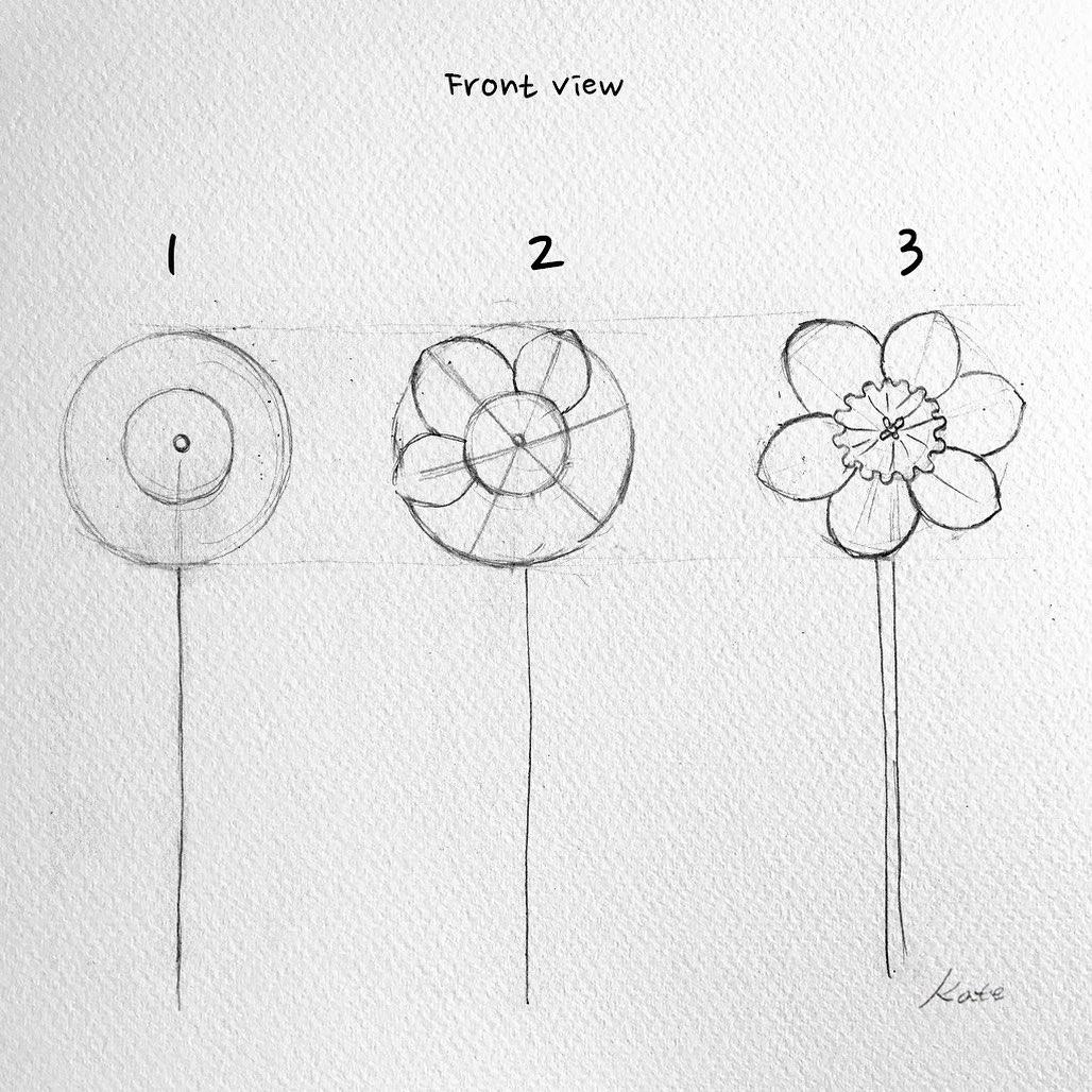 طريقة رسم زهرة