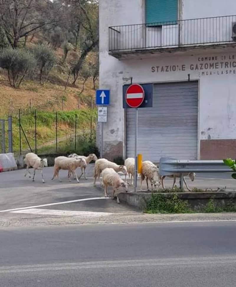 حيوانات تجتاح المدن بعد فرض الحجر المنزلي على سكانها